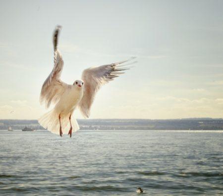gull-192909_1920